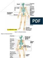 Bone Practical Figures