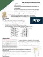 2- Medula, Vascularizacion y Meninges