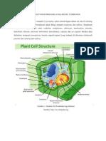 Macam Dan Fungsi Organela Dalam Sel Tumbuhan