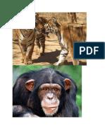 Wildlife Century