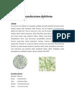 Clostridium Bacteriae