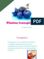 10.plantas_transgenicas