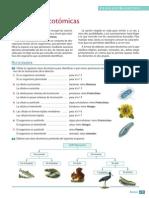 claves dicotomicas procedimiento
