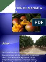 Exportación de mango a Finlandia