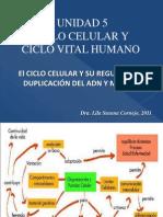 Ciclo Celular y Mitosis 11