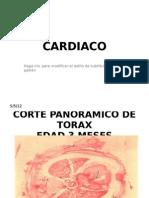 Cardiaco Practica Ppt