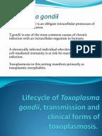 Toxo Final · document. toxoplasma embarazadas