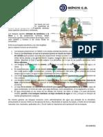 Los Bosques y Uso Consciente Del Papel