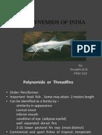 Polynemids of India