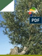 Caimari-Ruta Verde Del Olivo