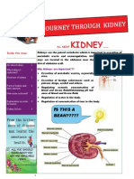 Journey of Kidney