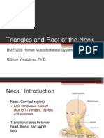 Triangles & Root of the Neck