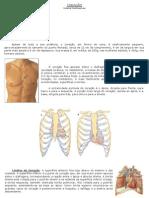 Anatomia_Coracao