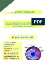 EL_NUCLEO_CELULAR[1]