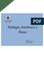 Miología Antebrazo y Mano Presentacion