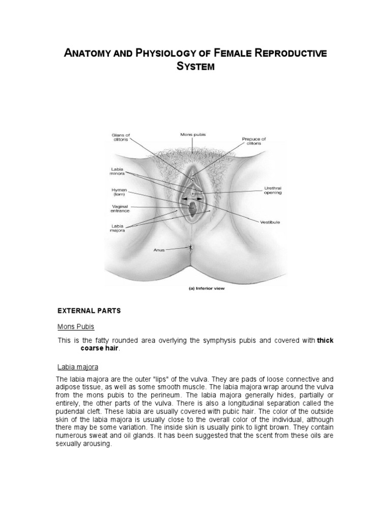Anatomy And Physiology Of Female Reproductive System Labia