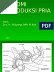 REPRODUKSI PRIA_001