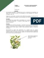 Pplagas y Enfermedades Agrotecnia