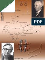 Ulrich S. Schubert and Christian Eschbaumer- Macromolecules Containing Bipyridine and Terpyridine Metal Complexes