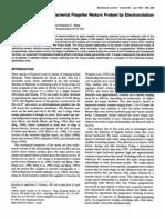 Richard M. Berry, Linda Turner and Howard C. Berg- Mechanical Limits of Bacterial Flagellar Motors Probed by Electrorotation