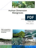 Human Dimension Mangroves-Class 19