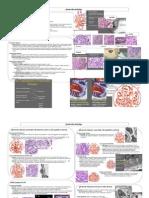 13 14.Glomerular Pathology
