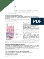 Epithelial & Nervous Tissue