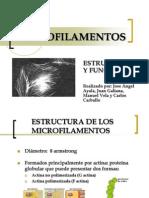 MICROFILAMENTOS 2