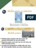 Mediile Polare Si Subpolare