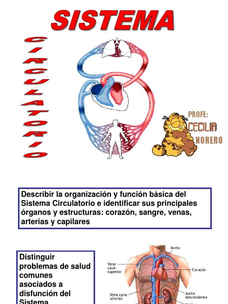 Circulatorio sistema médicos problemas del
