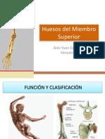 Huesos Del Miembro Superior