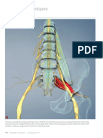 Assessing Sciatic Pain (Myofascial Techniques)