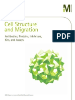 Cell Structure & Migration Product Selection Guide