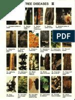 Tree Diseases III