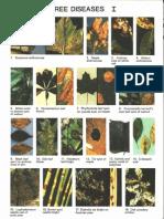 Tree Diseases I