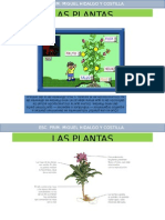 Las Plantas Alma