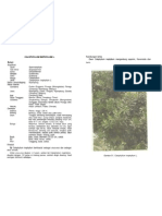 calophylluminophyllum-100707085209-phpapp01