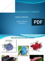 Taksonomi Hewan II Pisces. Alfian Firdaus