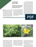 Wr295072(Tithonia Diversifolia Sumber Pupuk Hijau)