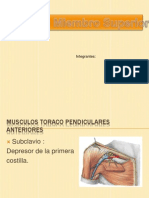 anatomusc