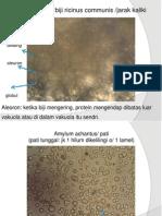 Slide Morfologi Tumbuhan (BAHAN UAS)