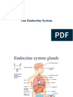Endocrine System Dental