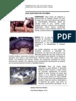 Razas Adaptadas en Colombia