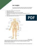 Anatomi sistem