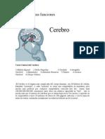 cerebro_funciones
