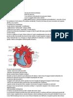 Cuore - anatomia base
