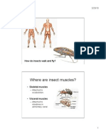 Insect Musculoskeletal System