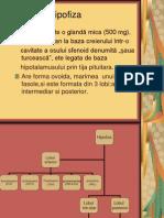 Www.referate.ro-hipofiza Ppt 048cd