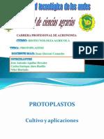 Cultivo de Protoplastos Listo Para Expo