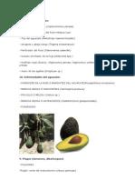 Plagas y Enfermedades de Frutales